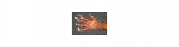 deli gloves